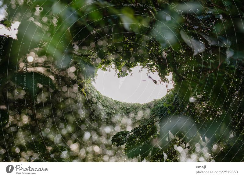 double exposure Environment Nature Plant Tree Foliage plant Forest Natural Green Double exposure Colour photo Exterior shot Experimental Abstract Pattern