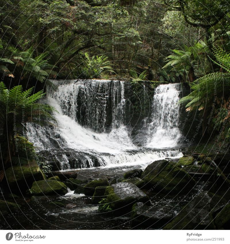 Waterfall in rainforest Nature Plant Climate Tree Grass Bushes Moss Virgin forest Rock River Esthetic Beautiful Natural Serene Relaxation Subdued colour