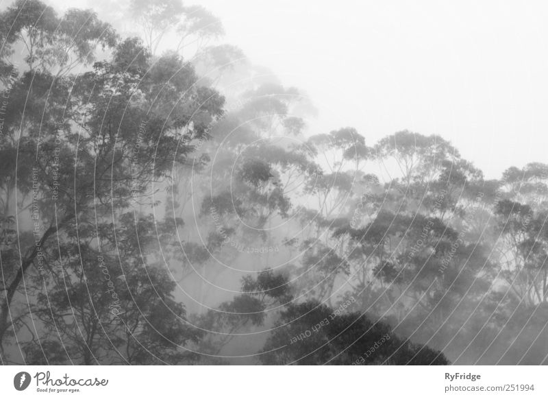 Rainforest in fog Nature Tree Plant Relaxation Gray Weather Fog Virgin forest