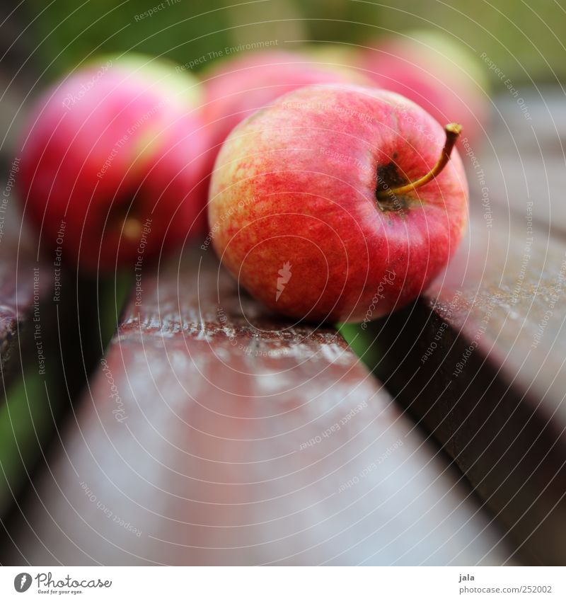 CHAMANSÜLZ | apples Food Fruit Apple Organic produce Vegetarian diet Finger food Healthy Delicious Red Colour photo Exterior shot Deserted Day