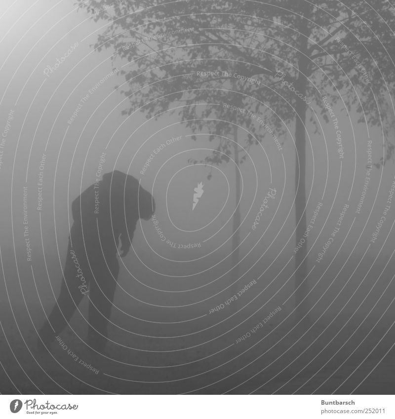 Human being Man Tree Loneliness Dark Gray Adults Sadness Fear Fog Stand Gloomy Threat Grief Longing Creepy