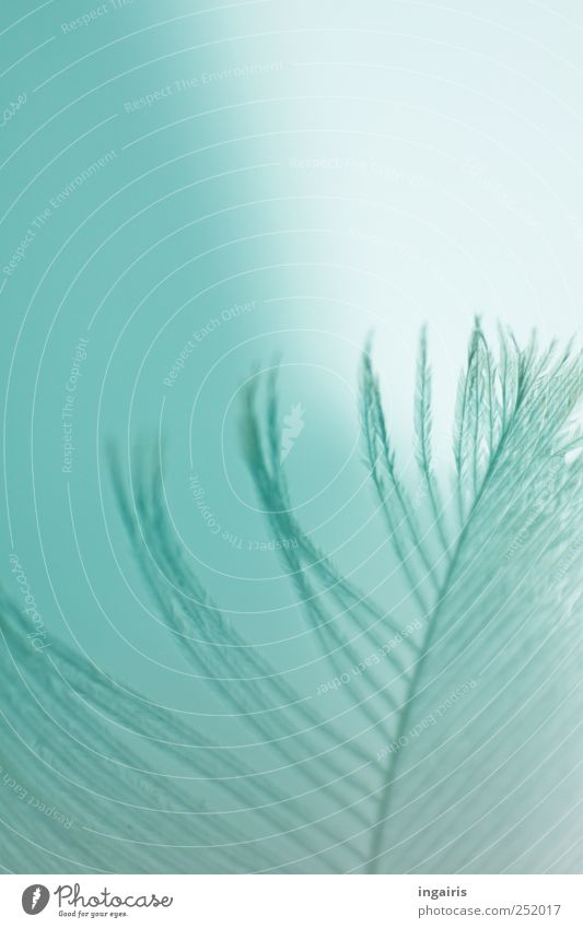 Sky Blue Beautiful Relaxation Emotions Moody Bright Natural Feather Delicate Sign Meditation Harmonious Purity Light blue Plumed