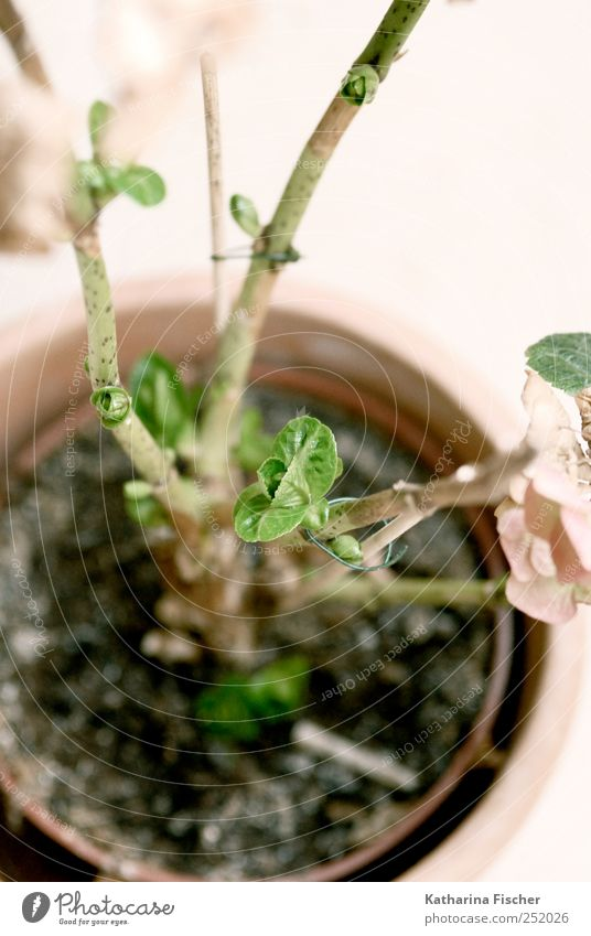 Nature Plant Green Flower Leaf Blossom Brown Growth Foliage plant Pot plant Emerging