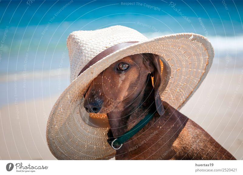 teckel dog with hat Beautiful Vacation & Travel Summer Sun Beach Friendship Animal Beautiful weather Ocean Watercraft Sunglasses Hat Pet Dog 1 Friendliness