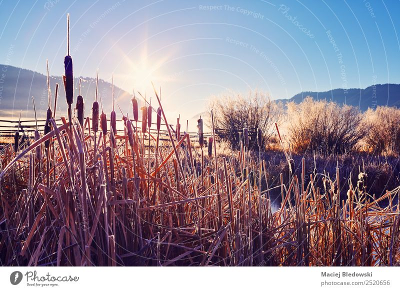 Frosty sunrise at the Grand Teton National Park, USA. Beautiful Vacation & Travel Trip Adventure Expedition Camping Sun Nature Landscape Autumn