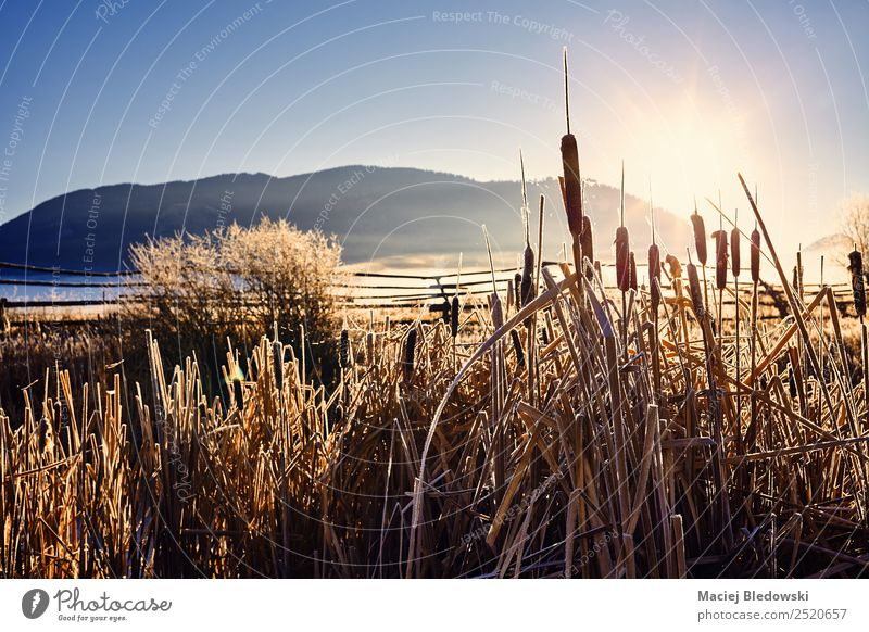 Golden frosty sunrise at the Grand Teton National Park, USA. Nature Vacation & Travel Beautiful Sun Landscape Calm Autumn Meadow Tourism Moody Trip Hiking