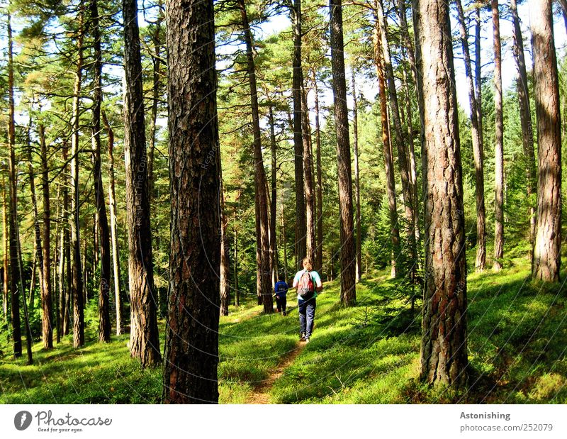 Hike in the forest Human being Masculine 2 Environment Nature Landscape Plant Earth Summer Weather Beautiful weather Tree Grass Bushes Moss Forest Going Tall