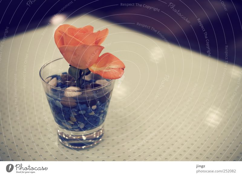 Water Blue Red Flower Yellow Stone Brown Glass Pink Gold Decoration