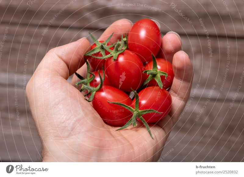 date tomatoes Vegetable Organic produce Vegetarian diet Healthy Eating Man Adults Arm Fingers To hold on Fresh Red Tomato tomato with dates Cocktail tomato