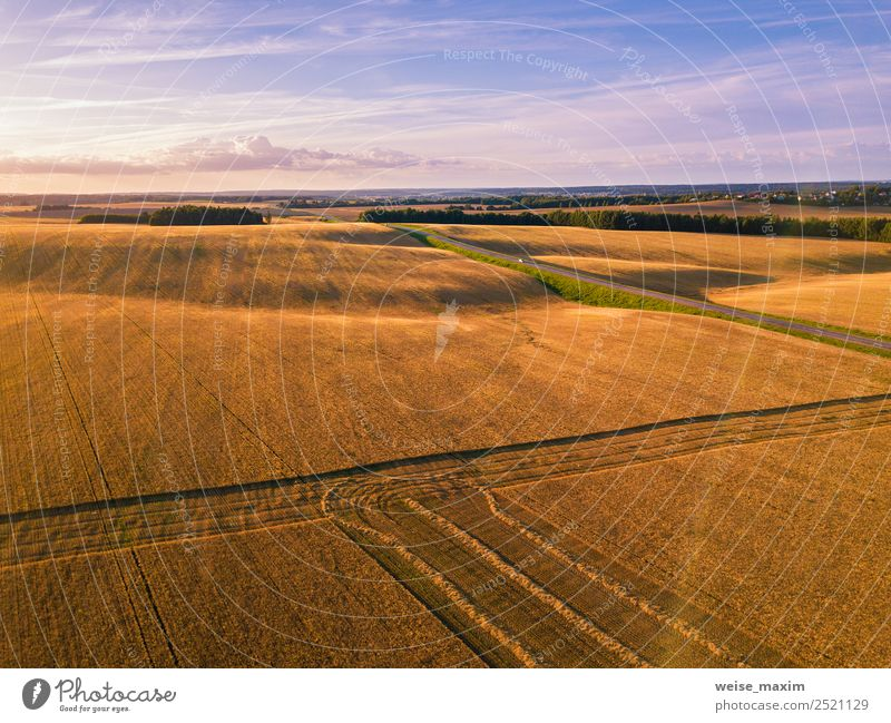 Summer august field at harvesting time in sunset sunlight Tourism Far-off places Work and employment Industry Business Machinery Nature Landscape Plant Sky