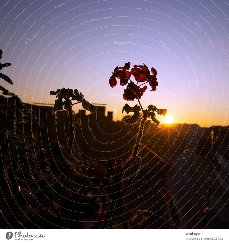 Sunset Environment Nature Plant Flower Orchid Downtown Skyline Window Window pane View from a window Street Beautiful Green Blue Yellow Black Dark Red