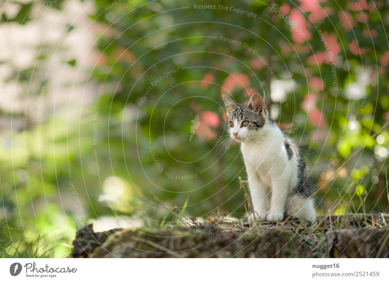 Cat Nature Summer Plant Green White Animal Forest Baby animal Yellow Environment Autumn Spring Grass Garden Brown