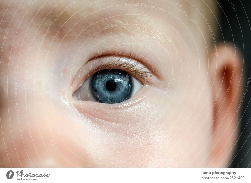 Child Blue Eyes Baby Toddler Face to face 0 - 12 months Innocent Tolerant Honest Pupil Iris 1 - 3 years