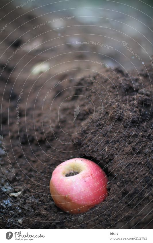 [CHAMANSÜLZ] Apple coffee compost Fruit Nutrition Environment Nature Garden Natural Nerdy Round Brown Red Decline Transience Change Compost Coffee Earth