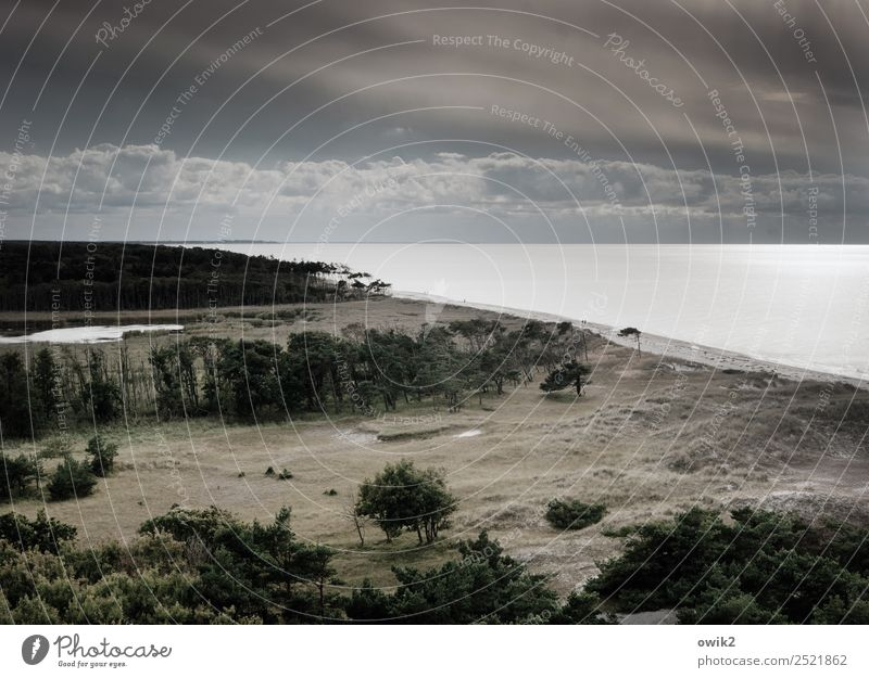 Wild, wide and windy Far-off places Environment Nature Landscape Plant Water Sky Clouds Horizon Autumn Beautiful weather Wind Tree Wind cripple Forest Coast