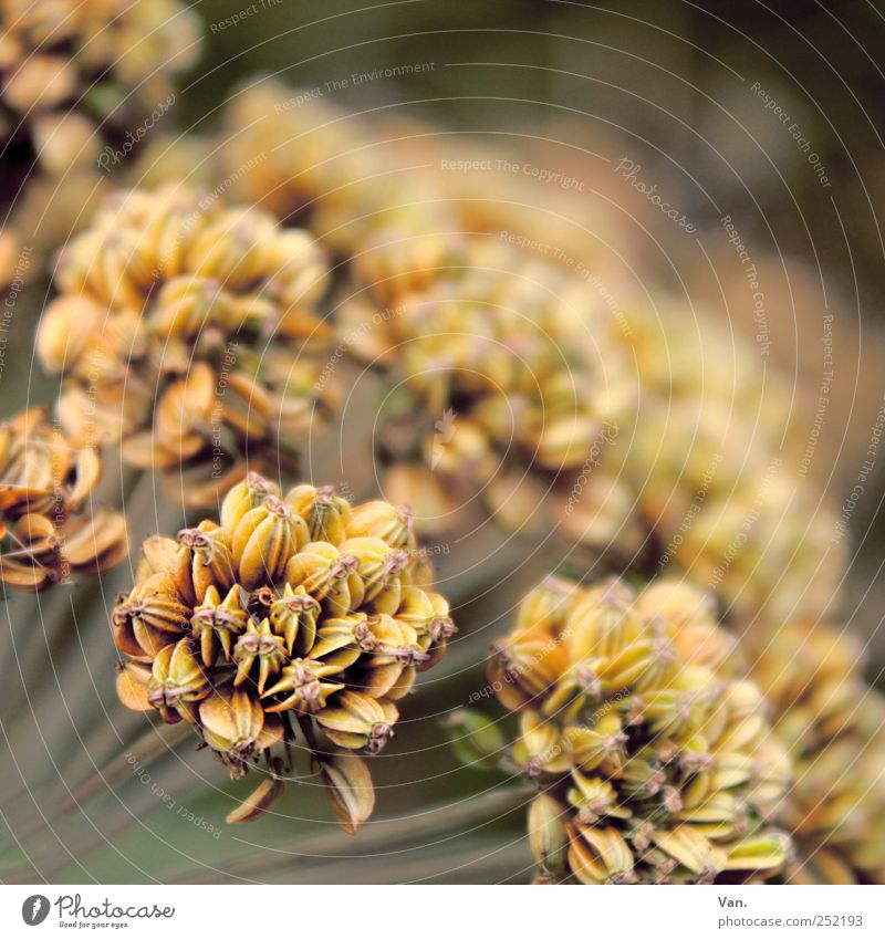 Stories of Old Nature Plant Autumn Flower Blossom Meadow Brown Yellow Faded Shriveled Colour photo Subdued colour Exterior shot Close-up Deserted Day Contrast
