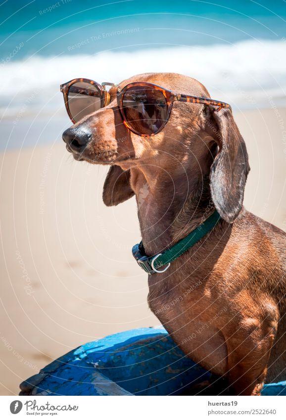 Dog with sunglasses on the beach Beautiful Vacation & Travel Summer Sun Beach Friendship Animal Coast Fishing boat Watercraft Sunglasses Pet 1 Friendliness