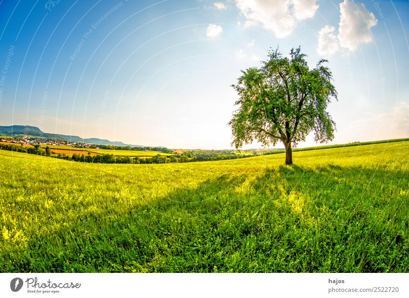 Pear tree in a meadow with Swabian Alb in the background Nature Sky Sun Summer Tree Meadow Hill Mountain Idyll Meadow flower Foliage plant Land Feature