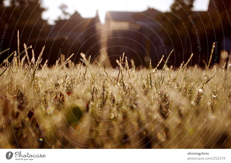 Nature House (Residential Structure) Autumn Grass Moody Dream Horizon Glittering Gold Wet Drops of water Hope Illuminate Lawn Infinity Dew