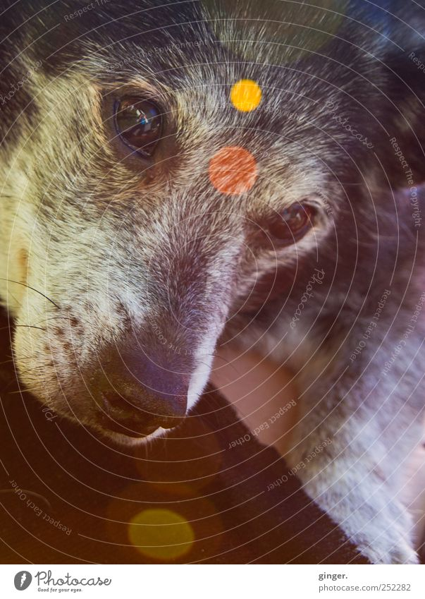 Old Animal Eyes Dog Gray Exceptional Friendliness Point Trashy Pet Carrying Point of light Lens flare Abstract