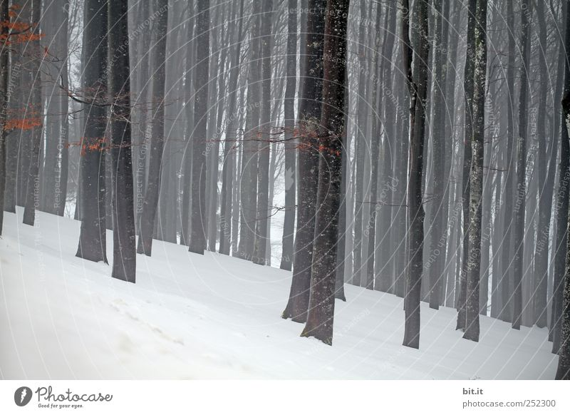 Nature White Tree Plant Winter Loneliness Black Forest Cold Snow Environment Landscape Gray Sadness Weather Ice