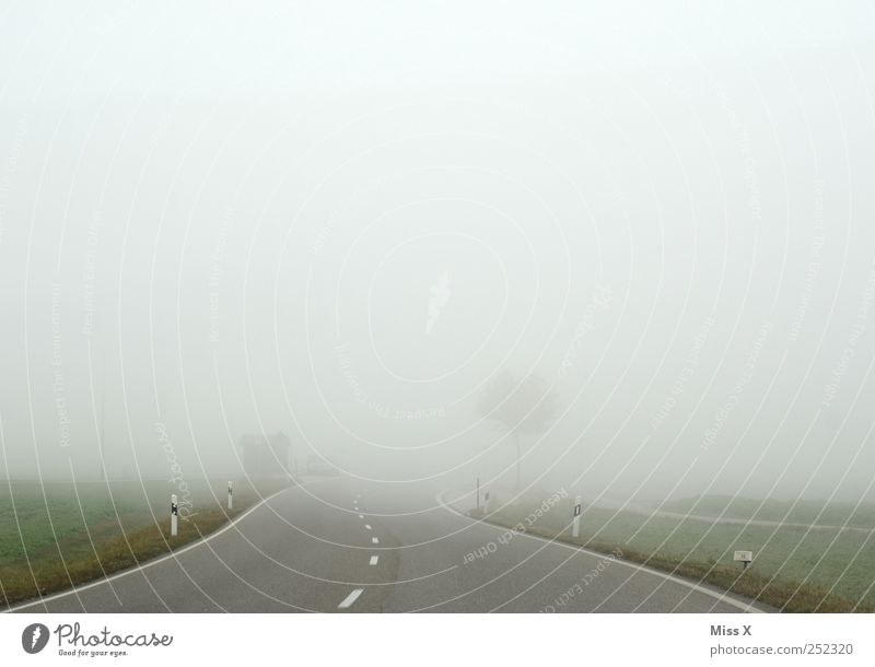 away into nowhere Weather Bad weather Fog Transport Traffic infrastructure Street Gloomy Gray Threat Safety Road safety Shroud of fog Misty atmosphere