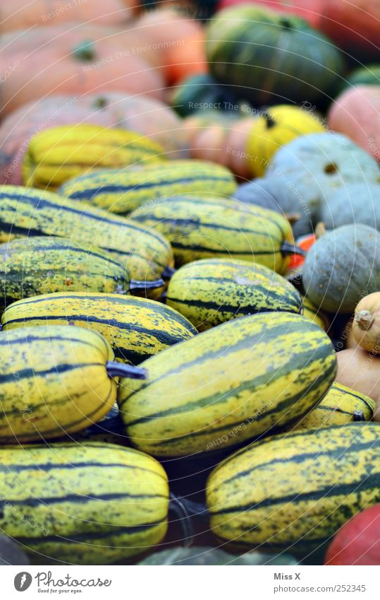 pumpkins Food Vegetable Nutrition Thanksgiving Hallowe'en Round Multicoloured Pumpkin ornamental pumpkin Farmer's market Vegetable market Market stall