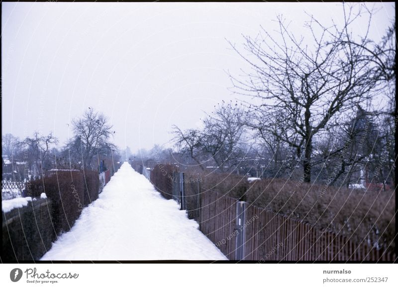 winter-escape Lifestyle Leisure and hobbies Far-off places Garden Environment Nature Winter Climate Climate change Fog Ice Frost Snow Deserted Hut Pedestrian
