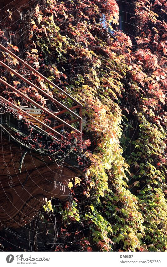 100% Autumn Nature Sun Sunlight Plant Ivy Village Small Town Downtown Outskirts Old town House (Residential Structure) Balcony Beautiful Yellow Gold Red