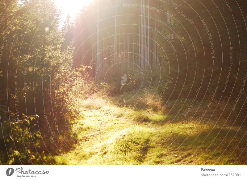 Forest walk impression Environment Nature Plant Sun Beautiful weather Tree Grass Clearing Relaxation To enjoy Hiking Summer Indian Summer Thuringia Colour photo