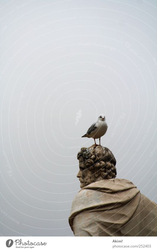 gull on its head Art Museum Sculpture Culture Animal Bird 1 Esthetic Brown Gray Silver White Might Past Seagull Antiquity Paris Philosopher Statue Greece Roman