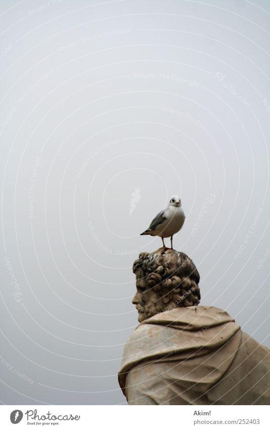 White Animal Gray Bright Art Brown Bird Wait Esthetic Might Culture Paris Past Statue Sculpture Silver