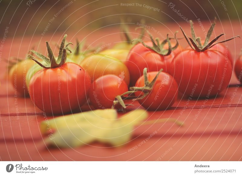 Green and red tomatoes Food Vegetable Lettuce Salad Tomato Nutrition Organic produce Vegetarian diet Slow food Finger food Italian Food Healthy Healthy Eating