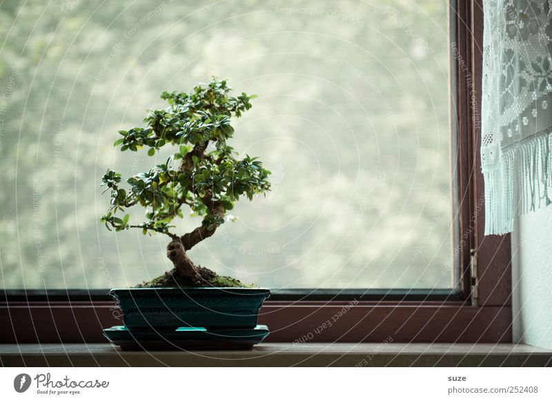 At the window Harmonious Contentment Calm Leisure and hobbies Art Culture Plant Air Tree Window Growth Small Green Serene Wisdom Peace Religion and faith Bonsar