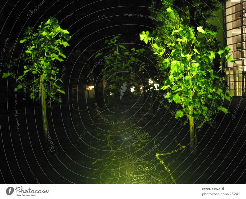 Butterflies and flies in the night Vine Night Long exposure Insect Lighting Flying