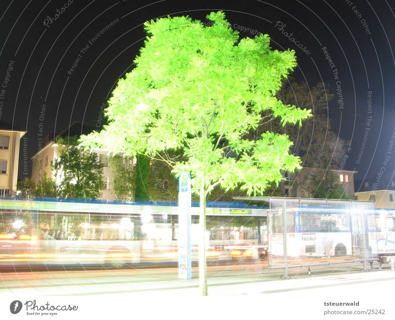 Tree in front of bus stop Night Long exposure Deciduous tree Transport Heilbronn Station Bus Street
