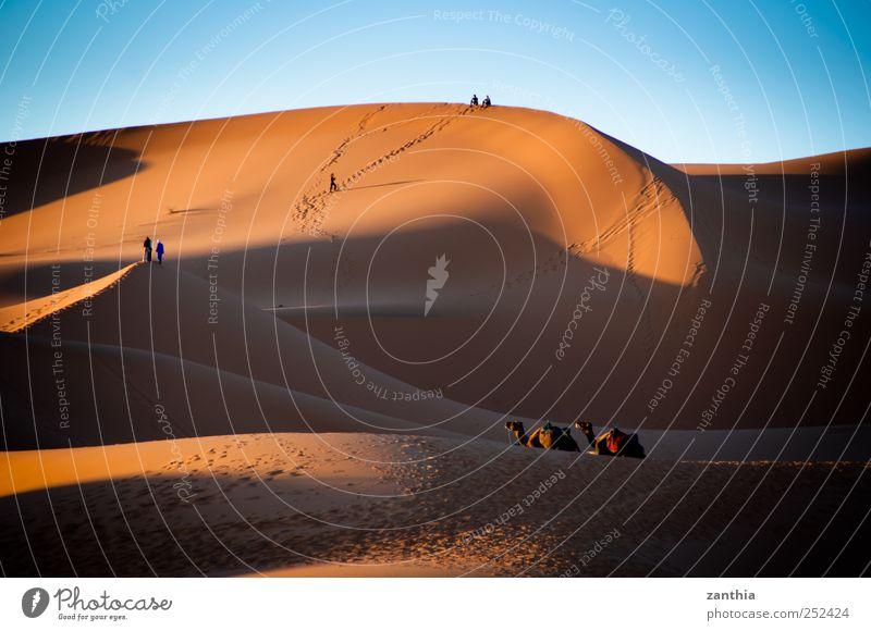 Erg Chebbi Climate Beautiful weather Desert Sahara Adventure Loneliness Experience Horizon Idyll Nature Vacation & Travel Risk Calm Tourism Tradition Survive