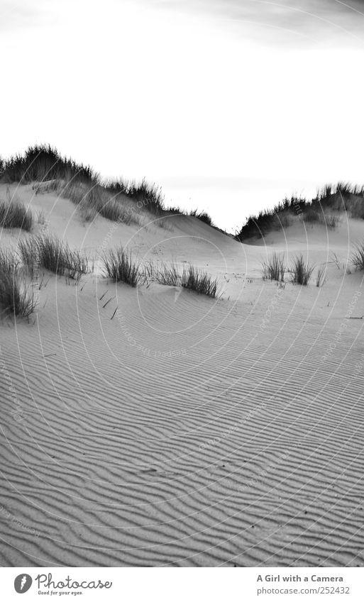 Spiekeroog I dune ridge Environment Nature Landscape Elements Sand Grass Marram grass Beach dune Exceptional Simple Elegant Gigantic Tall Beautiful Wild Steep