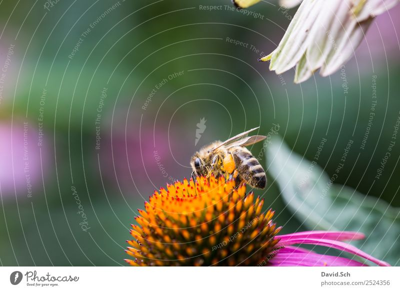 Bee on a flower Nature Plant Animal Flower Blossom Wild animal Wing Hair Insect Work and employment Touch To feed Crawl Near Yellow Green Violet Orange Diligent