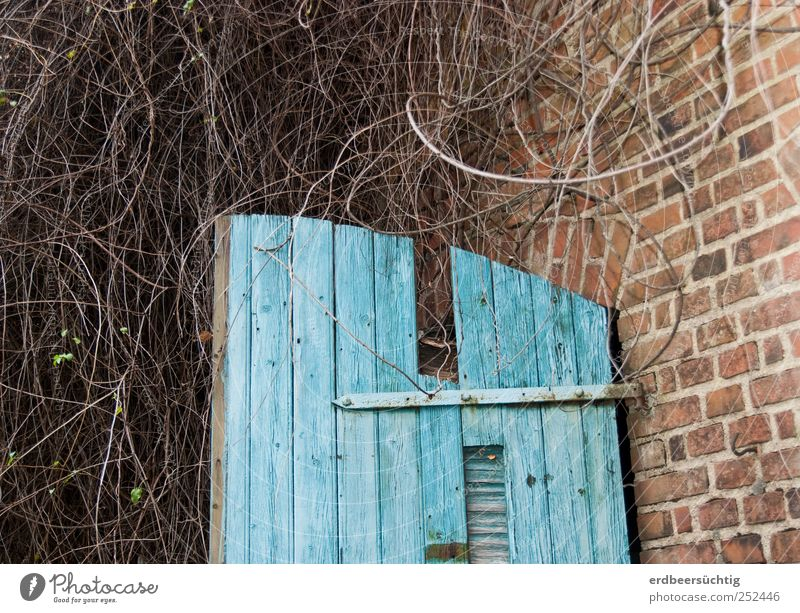 overgrown Plant Bushes Wild plant Hut Barn Wall (barrier) Wall (building) Door Stone Wood Brick Old Growth Idyll Weathered Overgrown Blue Flake off Muddled