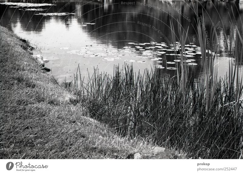 A piece of pond Environment Nature Landscape Plant Earth Water Beautiful weather Grass Bushes Leaf Park Coast Lakeside Pond Simple Natural Warm-heartedness