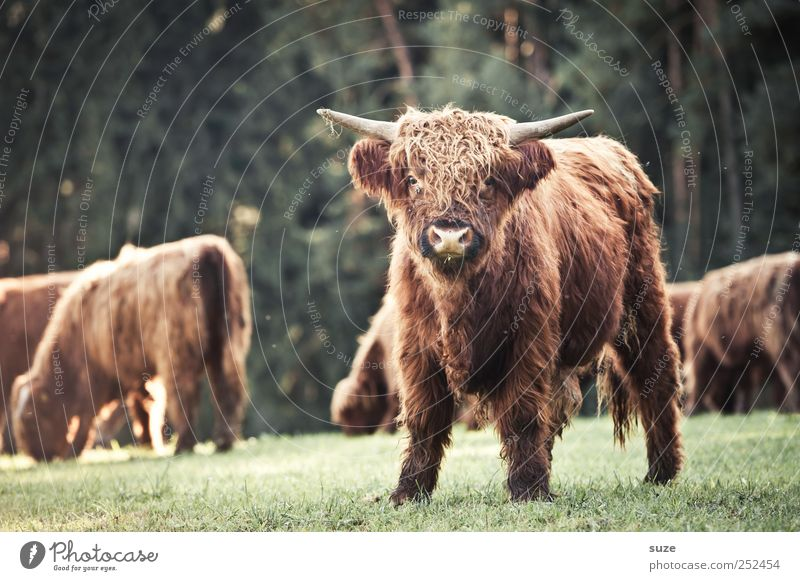 Nature Animal Meadow Environment Funny Field Baby animal Group of animals Cute Animal face Pelt Pasture Antlers Cuddly Calf Farm animal