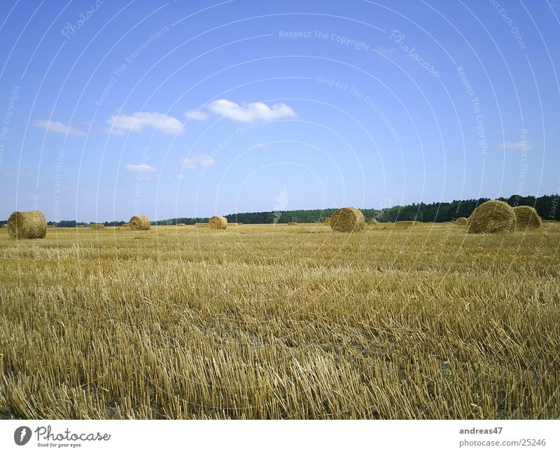 Field Grain Agriculture Harvest Straw Bale of straw