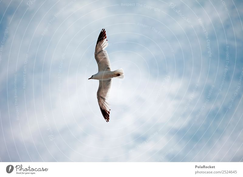#A# The High Bird... Art Esthetic Ease Flying Floating Coast Seagull Gull birds Wing Grand piano Tall Air Baltic Sea Animal Colour photo Subdued colour