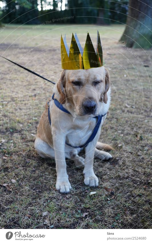 Royal Protocol Animal Pet Dog 1 Wait Cool (slang) Loyal Loyalty Responsibility Attentive Dependability Caution Patient Calm Self Control Interest Hope