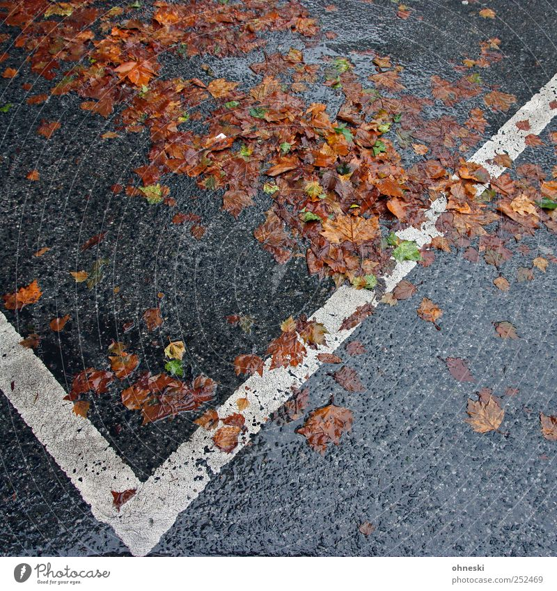 autumn Autumn Weather Bad weather Rain Street Parking lot Sadness Grief Fatigue Wet Colour photo Exterior shot Structures and shapes Deserted Copy Space bottom