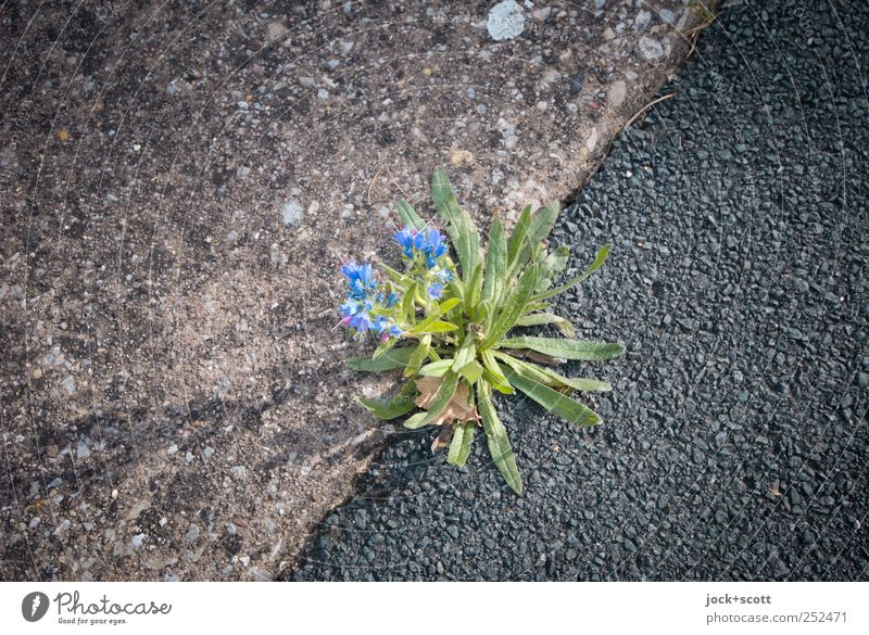 Blue Plant Green Leaf Black Blossom Lanes & trails Gray Line Growth Power Authentic Concrete Cute Simple Blossoming