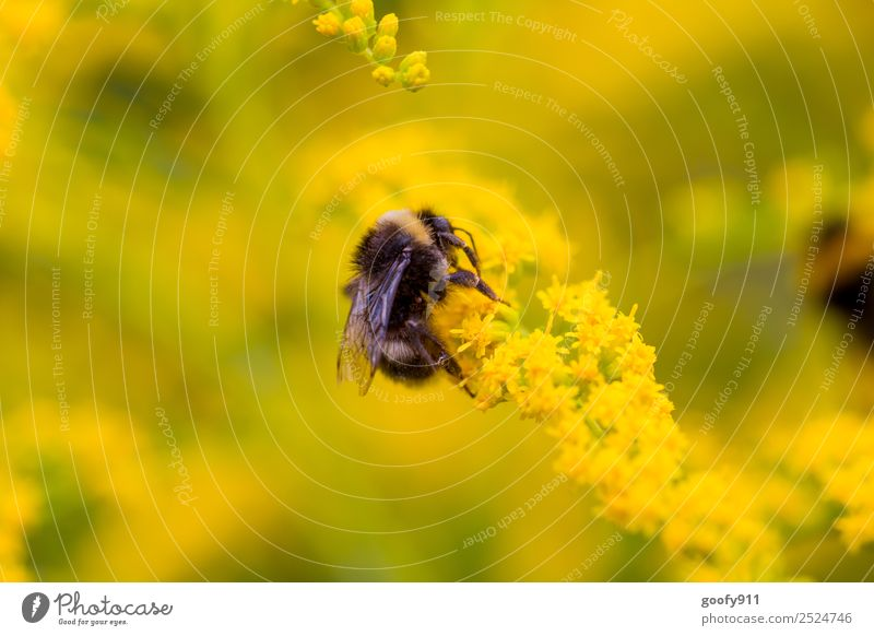 Almost up.... Trip Environment Nature Sunlight Spring Summer Flower Blossom Garden Park Meadow Animal Farm animal Wild animal Wing Pelt Bumble bee 1