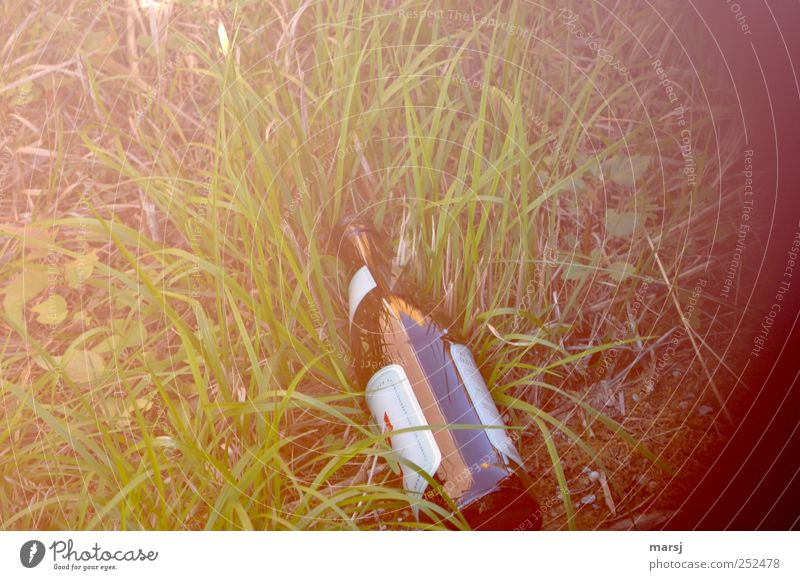 Nature Green Loneliness Grass Brown Lie Glittering Gloomy Glass Happiness Simple Beverage Pain Beer Bottle Alcoholic drinks