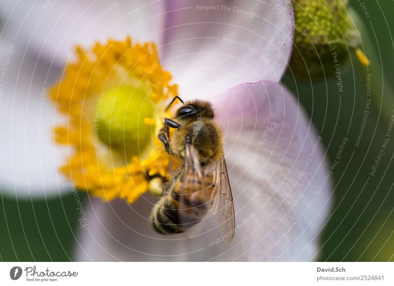 Bee on a flower Nature Animal Flower Blossom Wild animal Animal face Wing Hair Insect 1 Work and employment Touch To feed Hang Near Yellow Green Violet Diligent